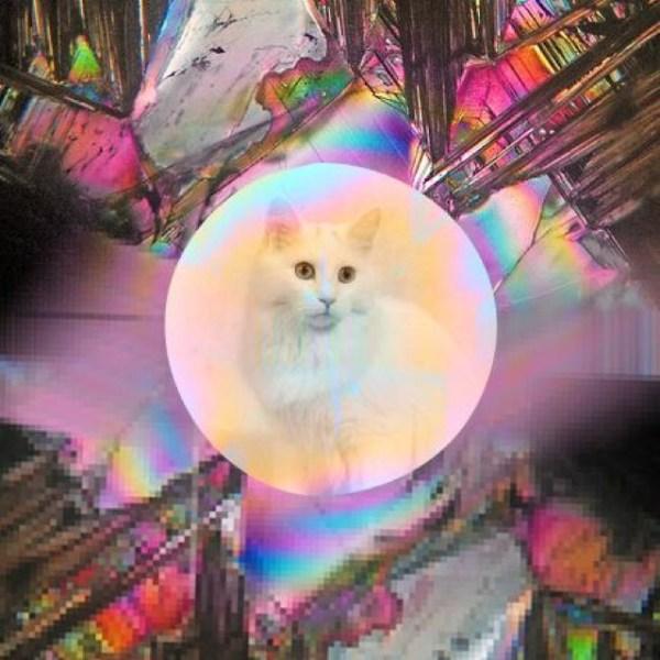gatos lsd 02