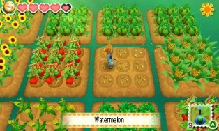 story of seasons 17