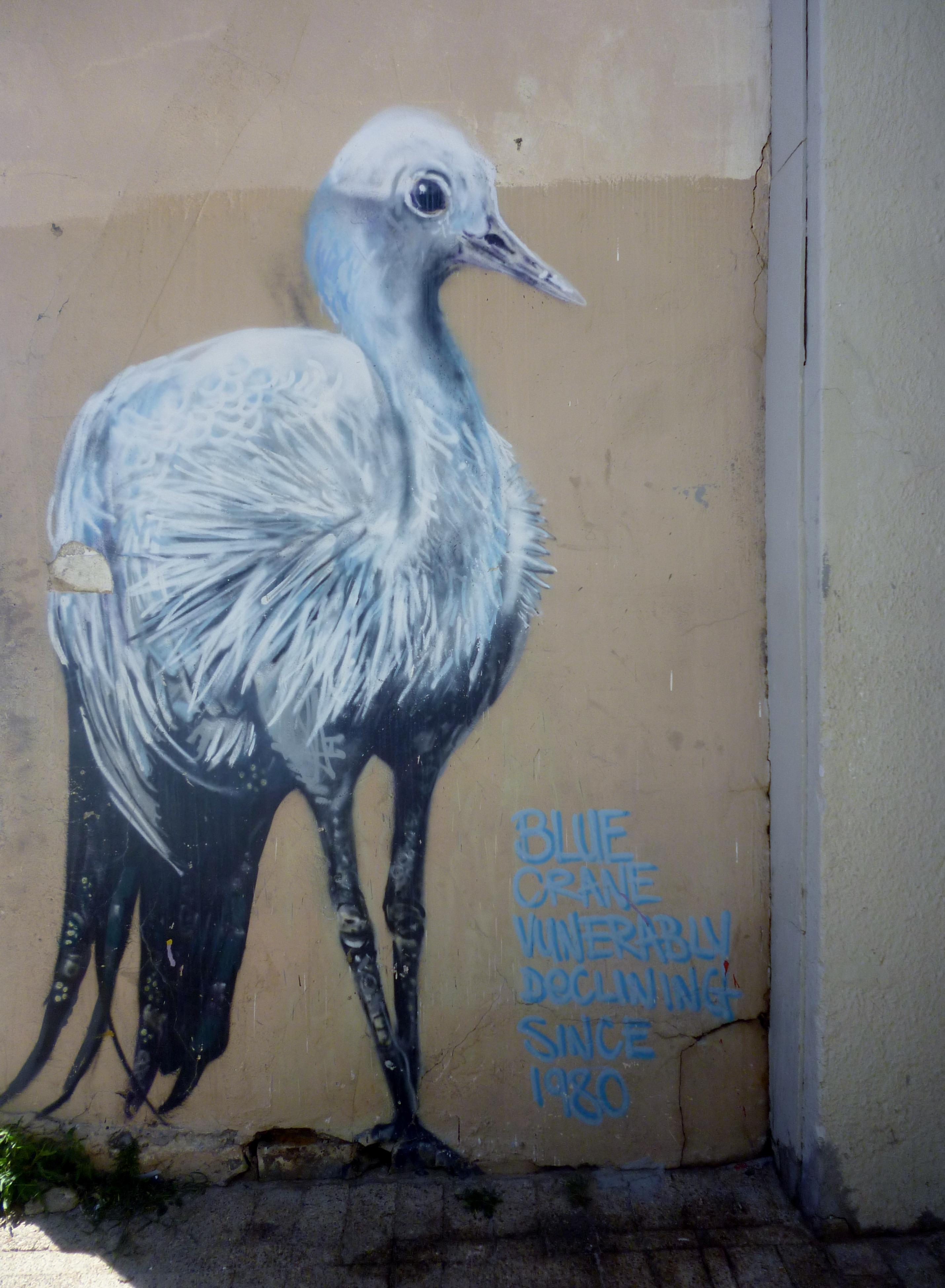 'Blue Crane vunerably declining since 1980'