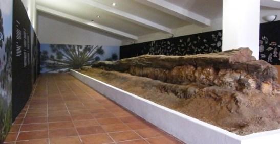Sierra-Norte-Almadén-Tronco-Fósil-redu2-640x330