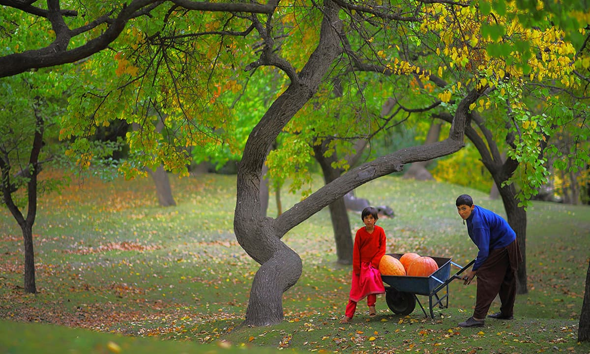 Royal Garden karimabad Hunza Gilgit Baltistan