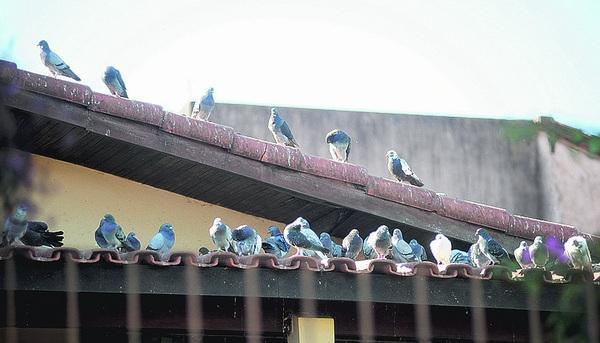 Foto: Emídio Marques (divulgação/internet)