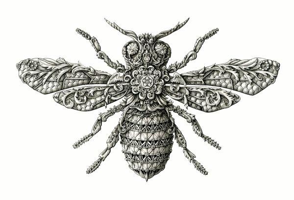 abelha Artista europeu faz desenhos surpreendentes de insetos Papo de Praga