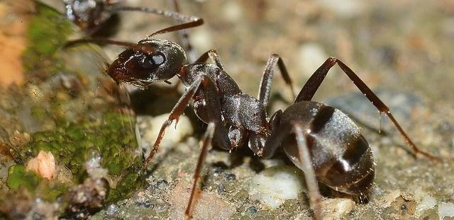 30115104977309-300x146 Você sabia que insetos também sofrem por causa do stress? Pragas