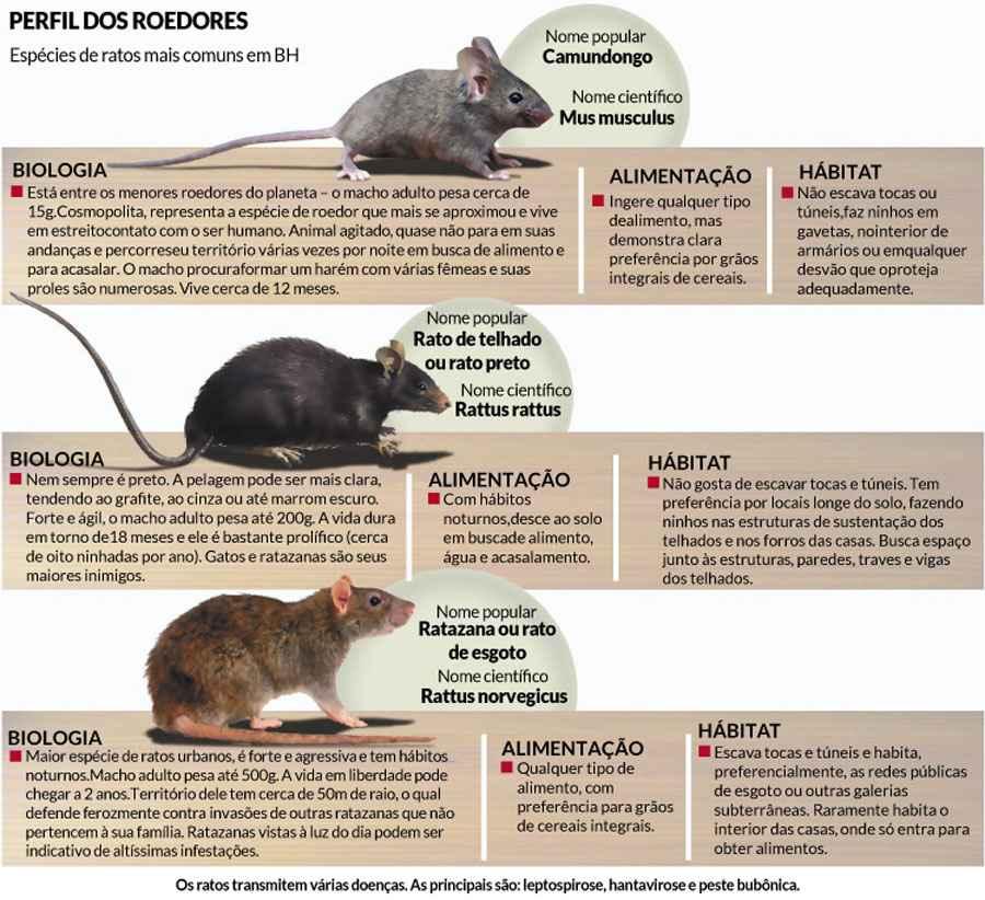20150930004503834352a BH enfrenta problemas com infestação de ratos no centro Notícias Pragas
