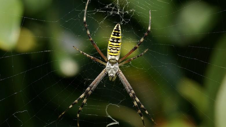 spider-60623_1280