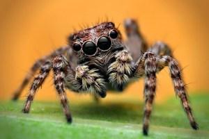 06 Coisas Aterrorizantes que as Aranhas Podem Fazer