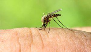 Aprenda a Como Evitar Picadas de Mosquitos