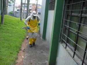 Dedetização Porto Alegre 24 Horas