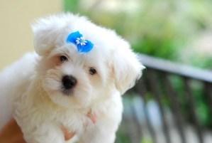 Desinsetização – Como Livrar o Cachorro Das Pulgas e Carrapatos