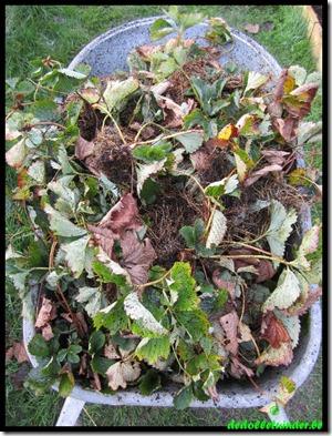 Kruiwagen vol aardbeiplantjes