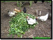 Diner time kippen