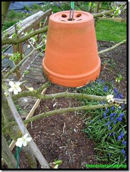 Oorwurmen nest in terracotta pot