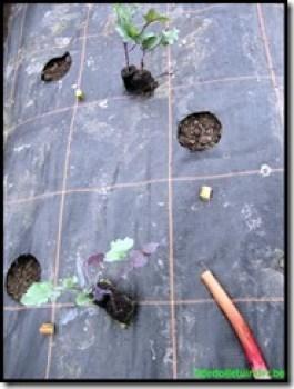 Kolen op stukje rabarber