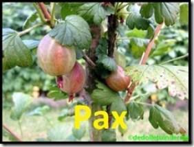 Kruisbes 'Pax'