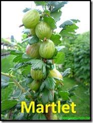 Kruisbes 'Martlet'