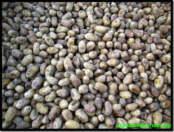 Cocons voor volgend jaar