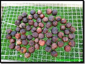 Drogen van de noten
