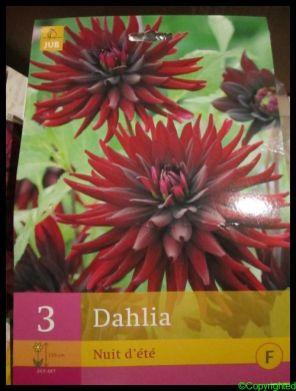 Dahlia's