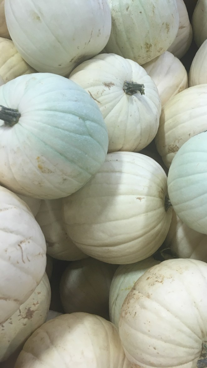 White Pumpkins Are The New Norm