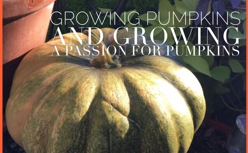 Growing Pumpkins And Growing A Passion For Pumpkins