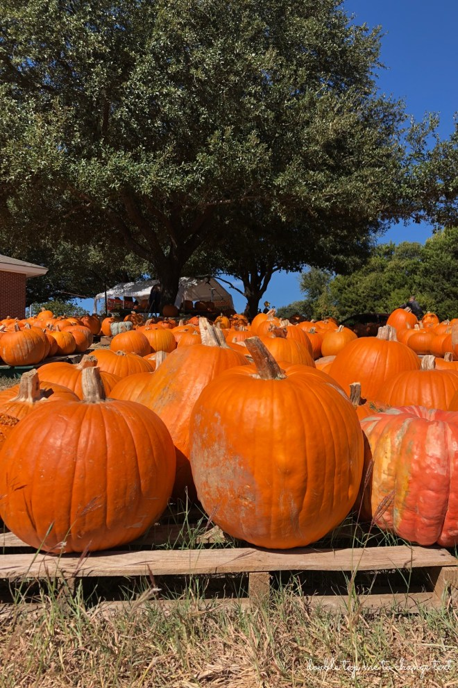 Pumpkin Patches And Why You Should Visit