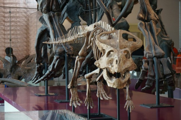 royal-ontario-museum-exhibit05