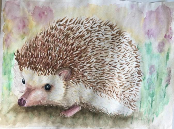 hedgehog_LRB