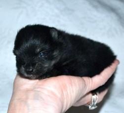 Cassie 3 weeks