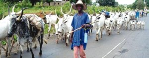 Farmers And Herders Must Clash, Because Cows Must Eat Grass — Seriki Fulani