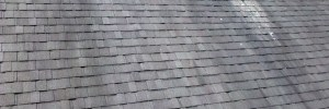 Toms River Roof Cleaning Service