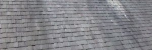 Professional Piscataway Roof Mold Removal