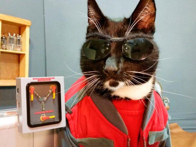 Cat-Cosplay-2