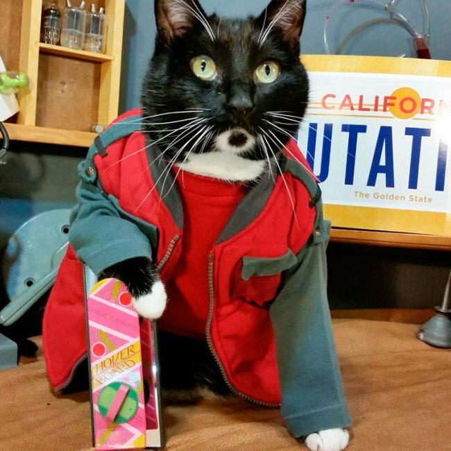 Cat-Cosplay-5