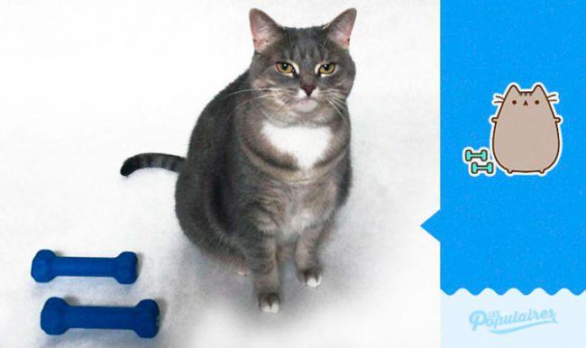 Julien-Therrien-Pusheen-the-Cat-1