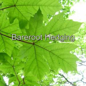 Bareroot Hedging
