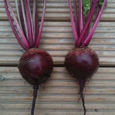 Beetroot, Bolthardy (15g pack)