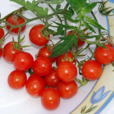 Tomato Koralik