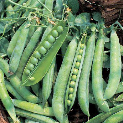 Peas - 'Greenshaft'