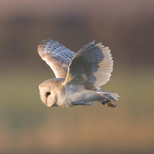 On the 3rd day of Christmas the Deepdale Crew give to you ... three barn owls, two glamping tents and a walk on a beautiful beach ...