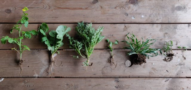 What we're learning about cover crops