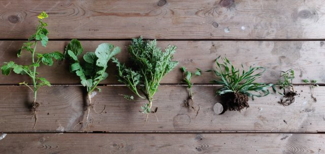 A row of plants on a wooden table