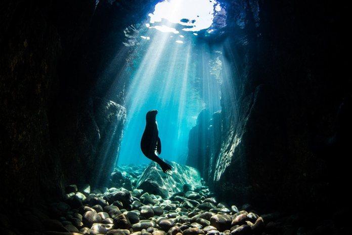 'Underwater Seascapes' Winner Nur Tucker