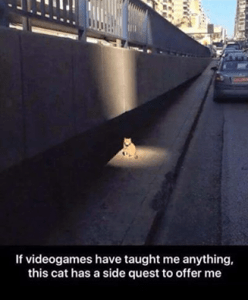 cat-sidequest