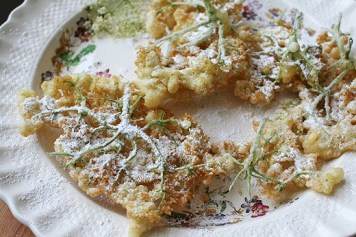 Recipe For Old-Fashioned Elderflower Fritters, Paracelcus, quote, elderberry tincture, cough syrup, glycerin syrup for children, confectioner's sugar, Hollerküchel, umbels, Piedmont, Italy, Germany, Austria, spring tonic, apple fritters, lower cholesterol, improve vision, heart health, coughs, colds, flu, bacterial and viral infections, tonsillitis, elderberry jam, wine, Israeli virologist Dr. Madeleine Mumcuoglu, research, avian flu cure, York, Nova, Gurney Nursery, edible landscaping, Sambucol, strengthen immune system, super berries, antioxidants, dandelion fritters, pancake batter, muffins, fritters, blossoms, aronia berries, attract birds and butterflies, cold and flu medicine, natural remedy, herbal remedy, homemaking, keeper at home, healthy living, health benefits, recipe, deep frying, coconut oil frying, breakfast, eat wild, foraging, old- fashioned custom, rural culture, roadside bushes, black elderberry,