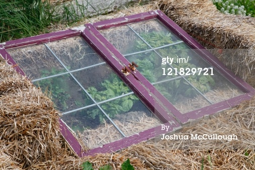 straw bales and old windows, classic cold frame, winter gardening, growing greens