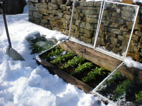 micro-climate, solar energy, garden in winter, cold frame in snow