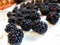 How To Keep Those Healthy Berries From Molding, blackberries, raspberries, mulberries, strawberries, vinegar bath, storing food tips, kitchen tip, harvesting mullein, elderberry tincture, white vinegar, apple cider vinegar, make jam, baked goods, eating fresh, health benefits, antioxidants, farmer's market, slowed memory loss, weight loss, good for the brain, good for eyes, slow the aging process, old-fashioned, vinegar kills mold, vinegar water bath, drying completely