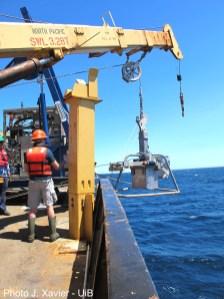 SponGES samples deep-sea Porifera in the North Atlantic