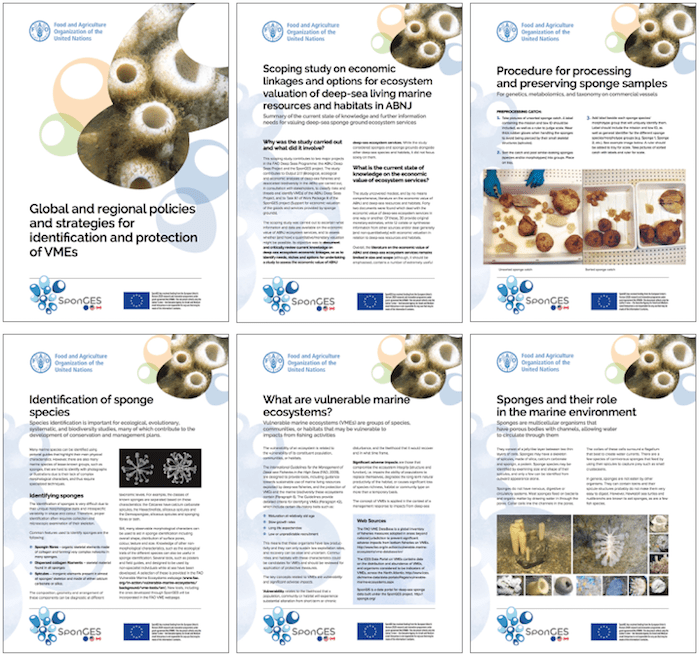 Deep-sea sponges in practice – Six info-sheets by SponGES partner FAO